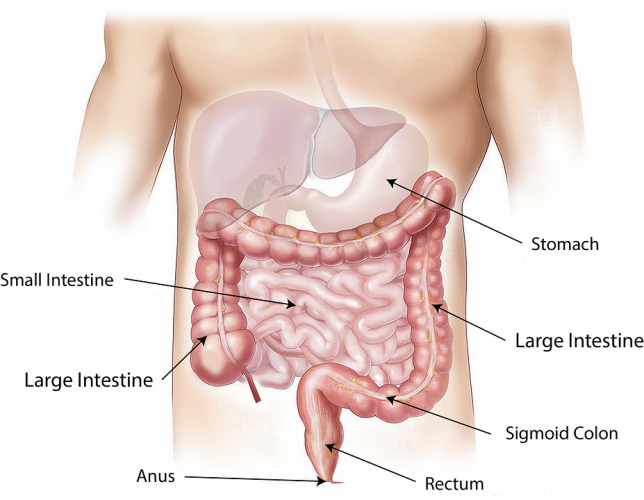Information, Resources and Videos About Inflammatory Bowel Disease (IBD) Crohn's Disease & Ulcerative Colitis.